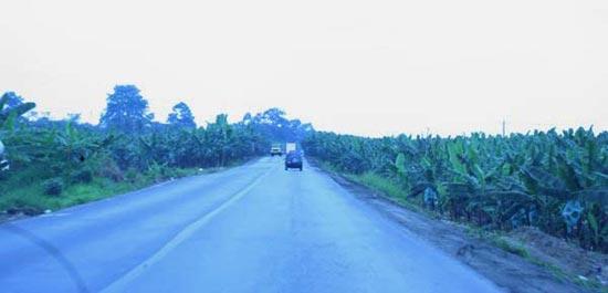 Kilometerlange Bananenplantagen der Forma Dole säumen die Strasse auf dem Weg zu den Life Forestry Teak-Plantagen