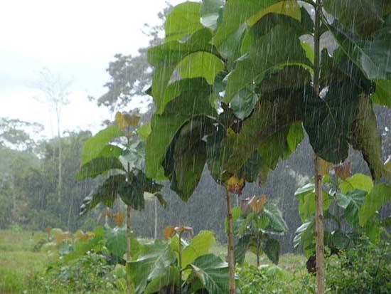 Green Season - Regenzeit in Costa Rica