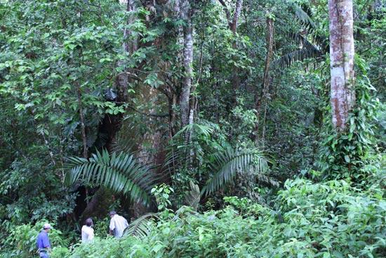 Sekundärwald der Life Forestry Plantagen in Costa Rica