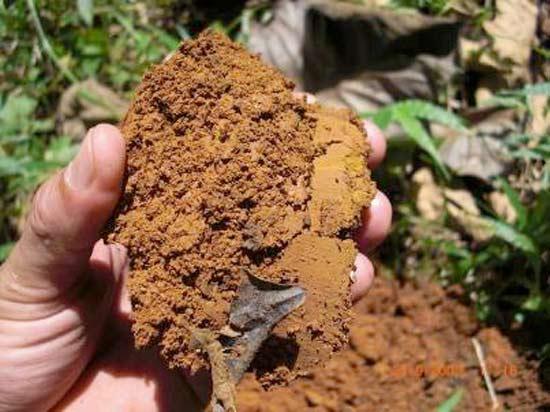 """Kontrolle der Erdeintragung der Teakholz-Pflanzen auf """"La Aldea"""" in Costa Rica."""