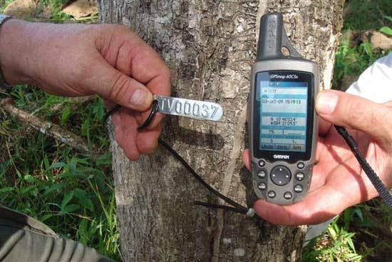 Georeferenzierung der Teakbäume auf Terra-Verde