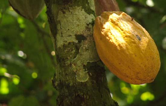 Kakao - Investment: Derzeit ein hochspekulatives Finanzprodukt
