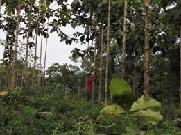 Baummessung der 29 Messparzellen