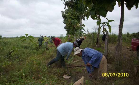 Unkrautentfernung in den Life Forestry Plantagen
