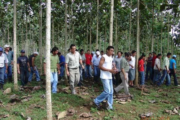 Schulung der Life Forestry Waldarbeiter in Costa Rica durch Forst-Ing. Dr. Diego Perez