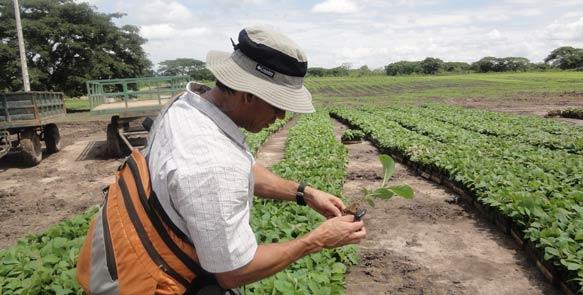 Prüfung der Teak-Setzlinge durch Forstdirektor Dr. Diego Perez