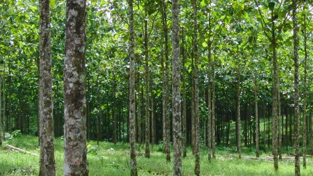 Geldanlage in Direkt-Investments der Life Forestry