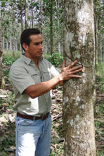 Life Forestry Forstdirektor Dr. Diego Perez in den Life Forestry Plantagen