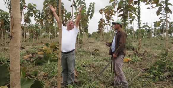 Schon nach gut zwei Jahren sind die Teakbäume auf ''Santa Maria'' bis zu drei Meter hoch