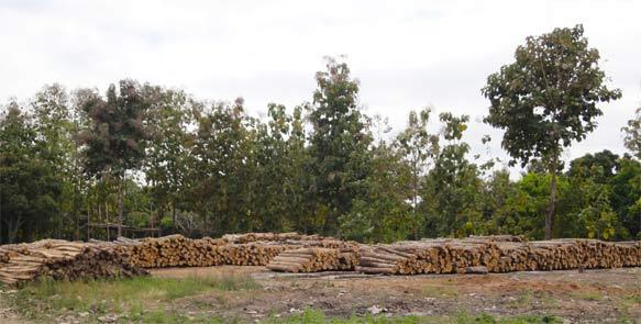 Teakholzlagerplatz Life Forestry