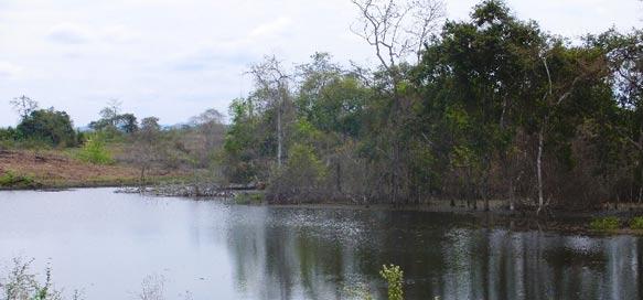 Natur-Biotop auf ''Santa Rosa II''