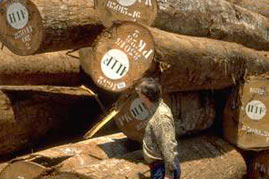 Waldrodung begünstigt den Klimawandel