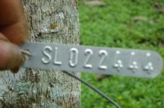 FSC-zertifizierte Teakholz-Plantagen