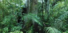Life Forestry punktet mit Top Rendite