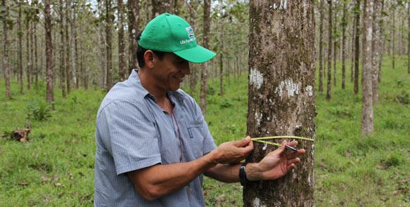 Dr. Diego Perez, Forstdirektor der Life Forestry Costa Rica S.A.
