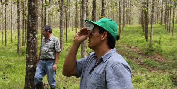 Vermessungsarbeiten in den Life Forestry Plantagen