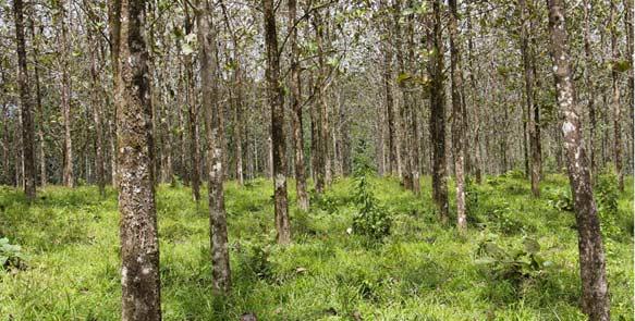 Life Forestry Plantagen