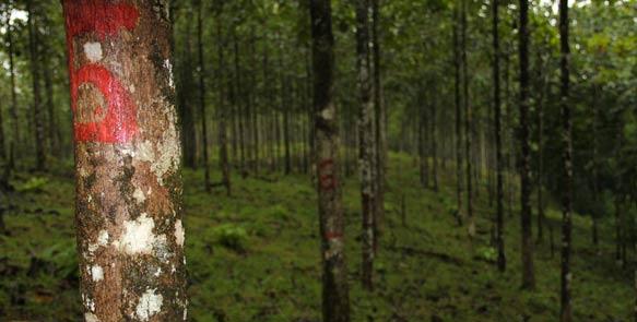 Messparzelle auf den Life Forestry Plantagen