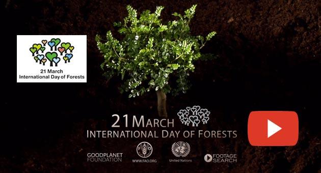 FAO Video: Tag des Waldes »»