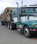 Holzinvestments beste Rendite bei geringstem Risiko