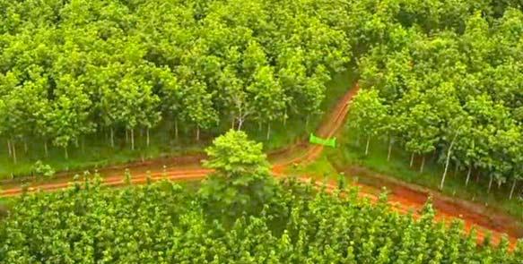 Flugaufnahme Teakplantagen Life Forestry Costa Rica S.A.