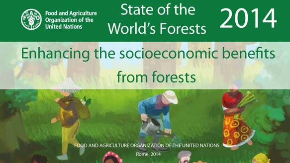 FAO - Der globale Waldbericht 2014