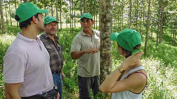 Wachstum Teakplantage ''Santa Lucia''