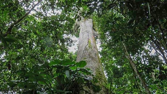Plantage 'Terra Verde'
