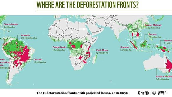 WWF erwartet dramatische Wald-Rodungen