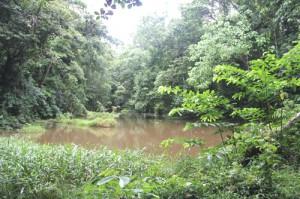 Life_forestry_Naturschutzzone