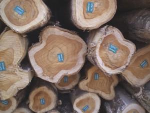 Teakholz: Edel, selten und wertvoll. Bild: Life Forestry