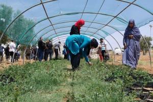 Mit Acacias for All engagiert sich eine junge Tunesierin gegen den Klimawandel.