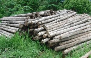Life Forestry begrüßt die neuen Möglichkeiten, illegal geschlagenes Holz zu identifizieren.