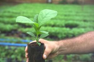 Life Forestry rät, einen Teil Ihres Geldes in Teakbäume zu investieren. Bild: Life Forestry