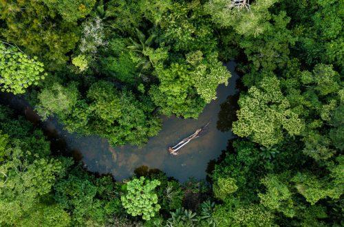 Peru führt Online-Tool zur Überprüfung der legalen Herkunft von Holz ein. Quelle: qualtaghvisuals/Shutterstock