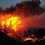 Waldbrände wüten in Südeuropa. Die Plantagen der Life Forestry sind vor Feuer geschützt.