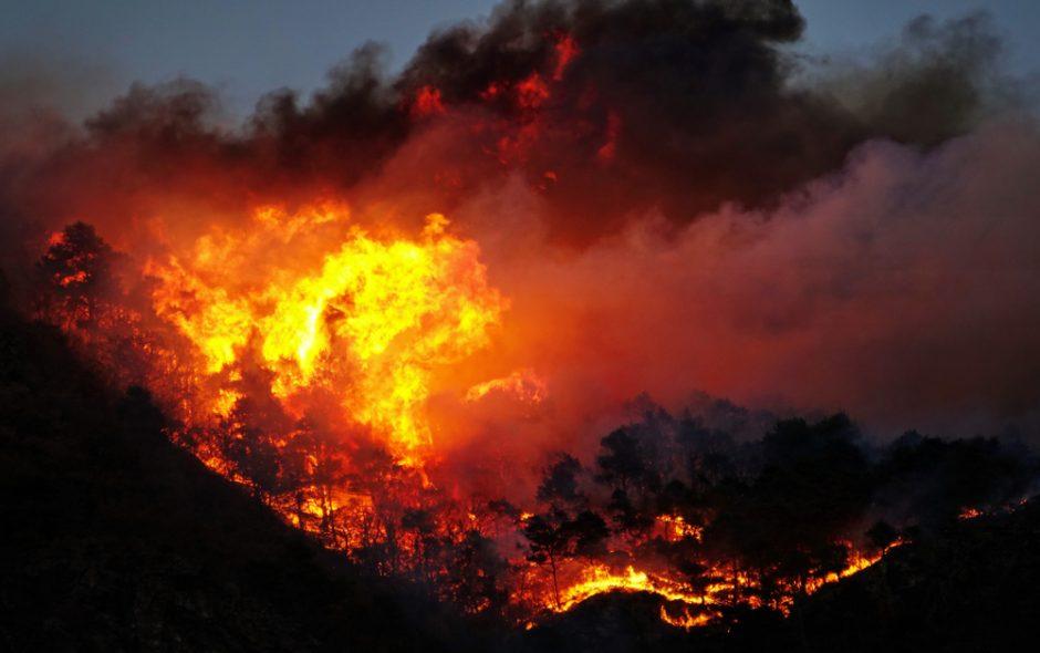 Waldbrände wüten in Südeuropa – warum die Plantagen der Life Forestry vor Feuer geschützt sind